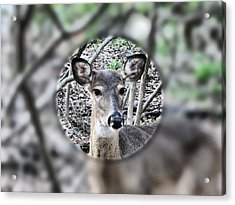 Deer Hunter's View Acrylic Print