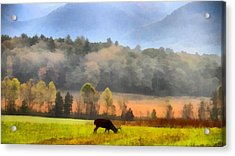 Deer In Cades Cove Smoky Mountains National Park Acrylic Print