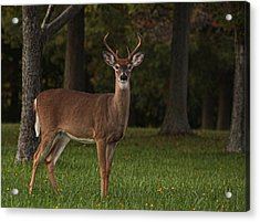 Acrylic Print featuring the photograph Deer In Headlight Look by Tammy Espino