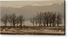 Deer In The Meadows Acrylic Print
