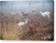 Deer In The Mist Acrylic Print by Donald Davis