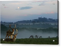 Deer In The Mist Acrylic Print