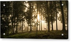 Deer In The Morning Mist. Acrylic Print