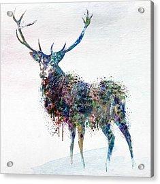 Deer In Watercolor Acrylic Print by Marian Voicu