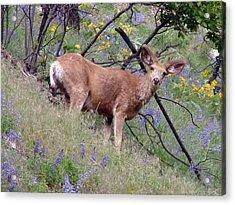 Deer In Wildflowers Acrylic Print by Athena Mckinzie