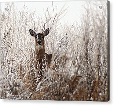 Deer In Winter Acrylic Print