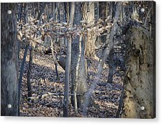 Acrylic Print featuring the photograph Deer by Michael Donahue