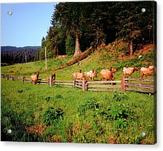 Deer No Hunting Here Acrylic Print