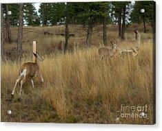 Deer On The Run Acrylic Print