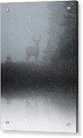 Deer Reflecting Acrylic Print