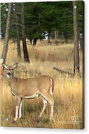 Deer Strikes A Pose Acrylic Print