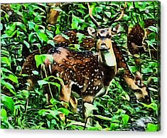 Deer's Green Day Acrylic Print