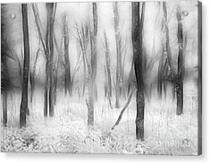 Defenders Of The Forest II Acrylic Print by Dan Carmichael