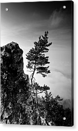 Defiant Acrylic Print by Davorin Mance
