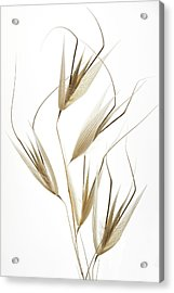 Delicacy Of Nature Acrylic Print by Shogun