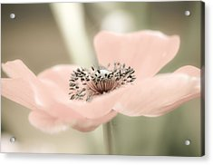 Delicate Anemone Acrylic Print by Julie Palencia