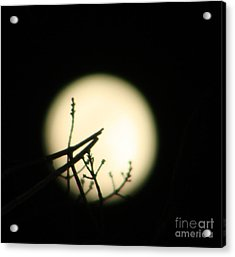 Delicate Balance Moon Acrylic Print