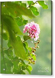 Delicate Blossom Acrylic Print by Audrey Van Tassell