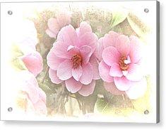 Delicate Camellias Acrylic Print by Michelle Orai