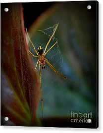 Acrylic Print featuring the photograph Delicate  Constructor by Marija Djedovic