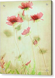 Delicate Dance Acrylic Print by Patricia Strand