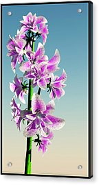 Delicate Flower... Acrylic Print by Tim Fillingim