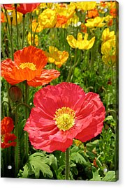 Delicate Fowers Acrylic Print by Pat Knieff