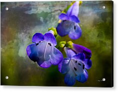 Delicate Garden Beauty Acrylic Print by Mick Anderson