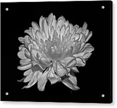 Delicate Glow Acrylic Print by Rita Mueller