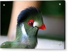 Delicate Green Turaco Bird With Red Beak White Patches And Black Crown Acrylic Print