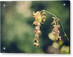 Delicate Acrylic Print by Heather Applegate