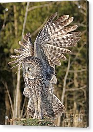 Acrylic Print featuring the photograph Delicate Landing  by Heather King