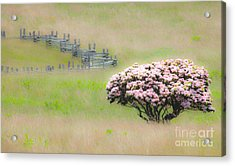 Delicate Meadow - A Tranquil Moments Landscape Acrylic Print by Dan Carmichael