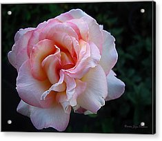 Acrylic Print featuring the photograph Delicate Pink by Joyce Dickens