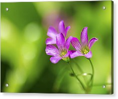 Acrylic Print featuring the photograph Delicate Purple Wildflowers by Leigh Anne Meeks