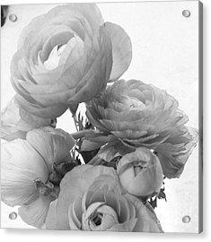 Delicate Ranunculus Acrylic Print