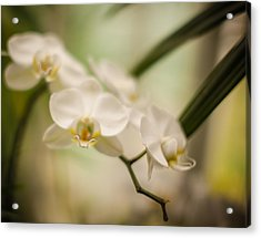 Delicate Romance Lace Acrylic Print by Mike Reid