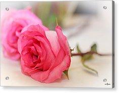 Delicate Rose Acrylic Print