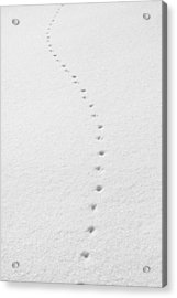 Delicate Tracks In The Snow Acrylic Print