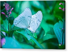 Delicate Twins Acrylic Print