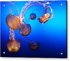 Acrylic Print featuring the photograph Delicate Waltz by Caryl J Bohn