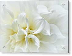 Delicate White Softness Acrylic Print