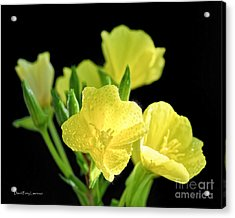 Delicate Yellow Wildflowers In The Sun Acrylic Print