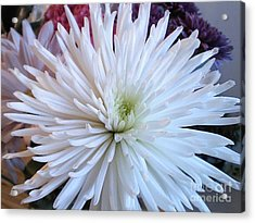 Delicate Yet Strong Acrylic Print by Angelia Hodges Clay