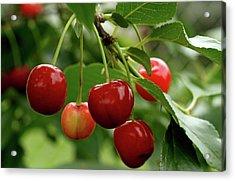 Delicious Cherries Acrylic Print by Sandy Keeton