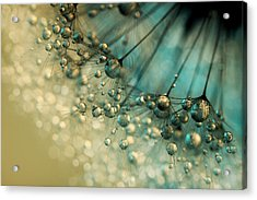 Acrylic Print featuring the photograph Delicious Dandy Drops by Sharon Johnstone