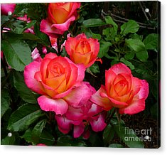 Delicious Summer Roses Acrylic Print by Richard Donin