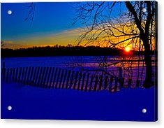 Delight Behind The Fence Acrylic Print