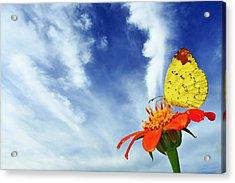 Delight Acrylic Print by Suradej Chuephanich
