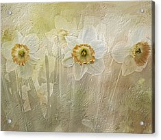 Delightful Daffodils Acrylic Print by Diane Schuster